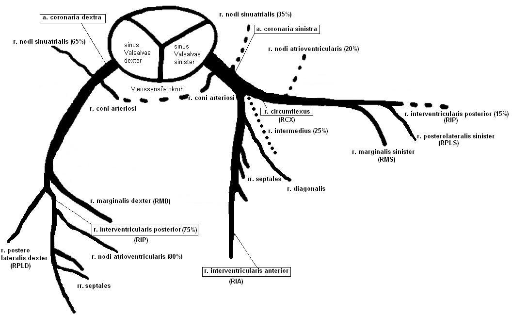 anatomy20112012  u2013 kulanwiki